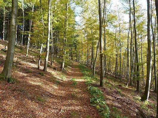 So ging es auf der Waldraute in den dichten Wald hinein.