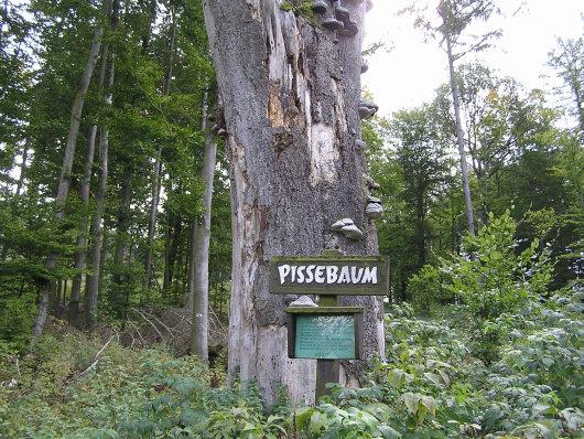 Der Pissebaum.
